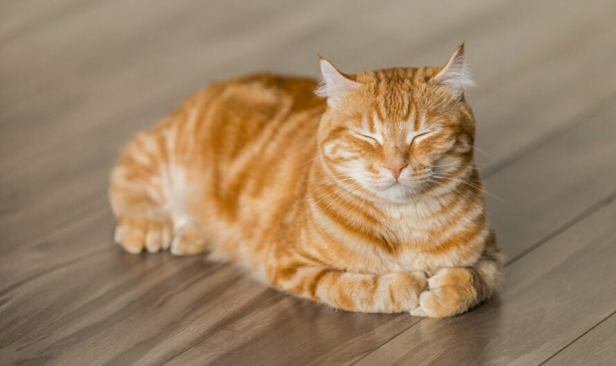 Common cat diseases that shouldn't be ignored