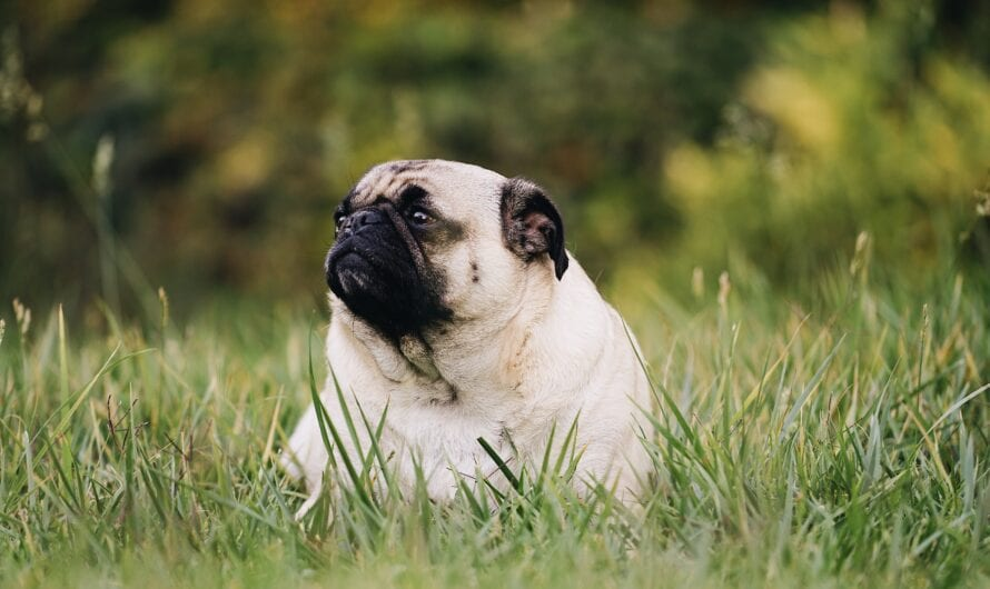 Increasing Obesity in Pets: What should you know?
