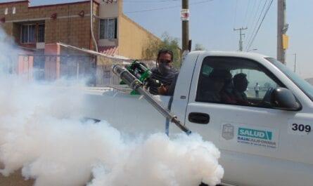 CBD Oil As A Natural Flea Repellent