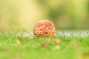 Longterm Effects of Mushroom
