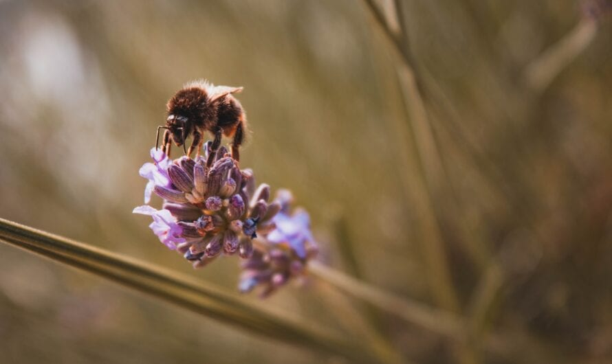 Hemp and Bees: The Significance Behind It!