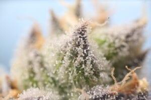 Cannabinoid for Anxiety