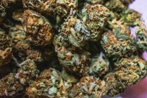 Hepatitis C and marijuana